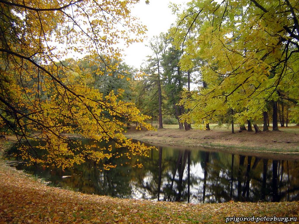 Золотая осень в Ломоносове