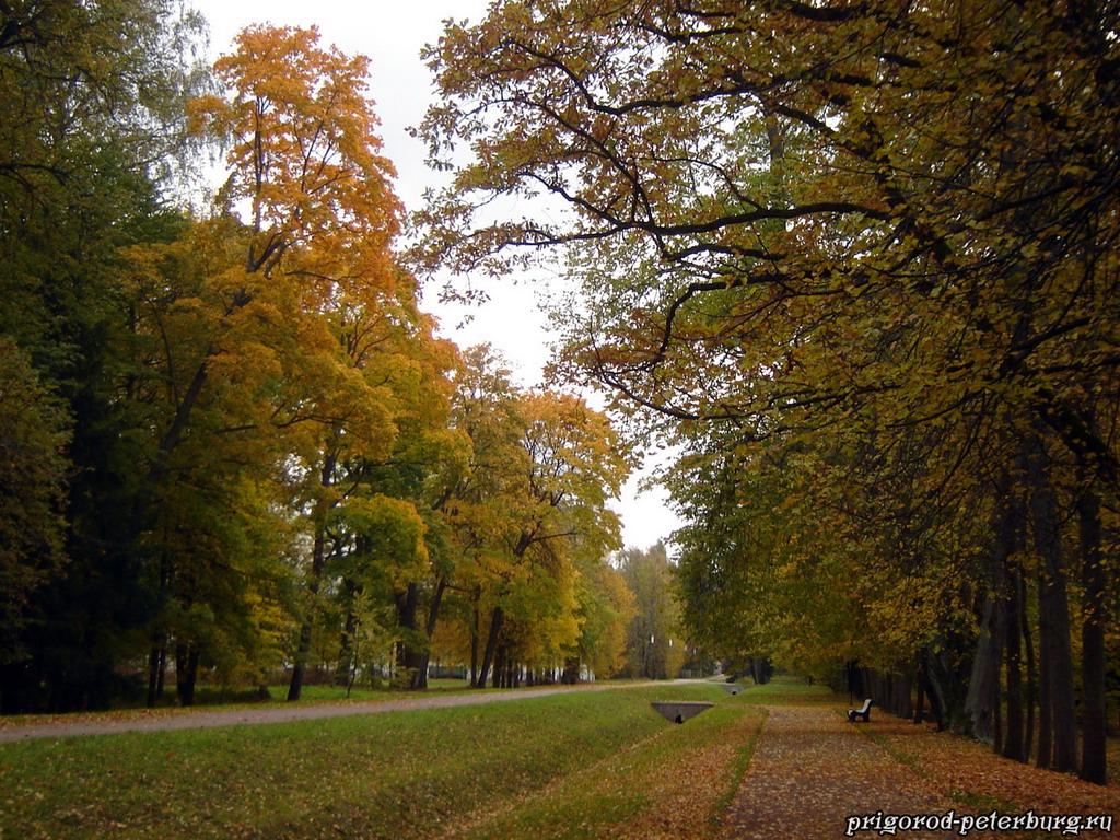 Золотая осень 2010