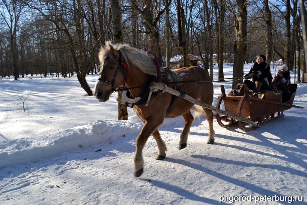 Витославлицы - катание на санях