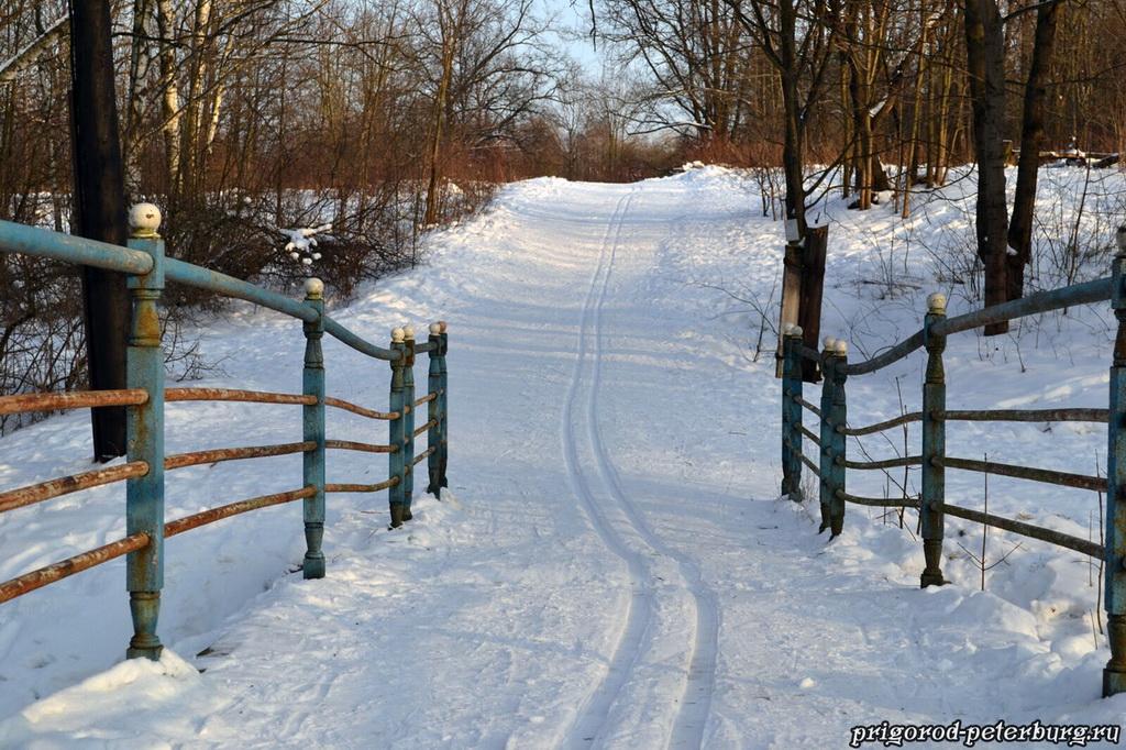 Невский лесопарк зимой