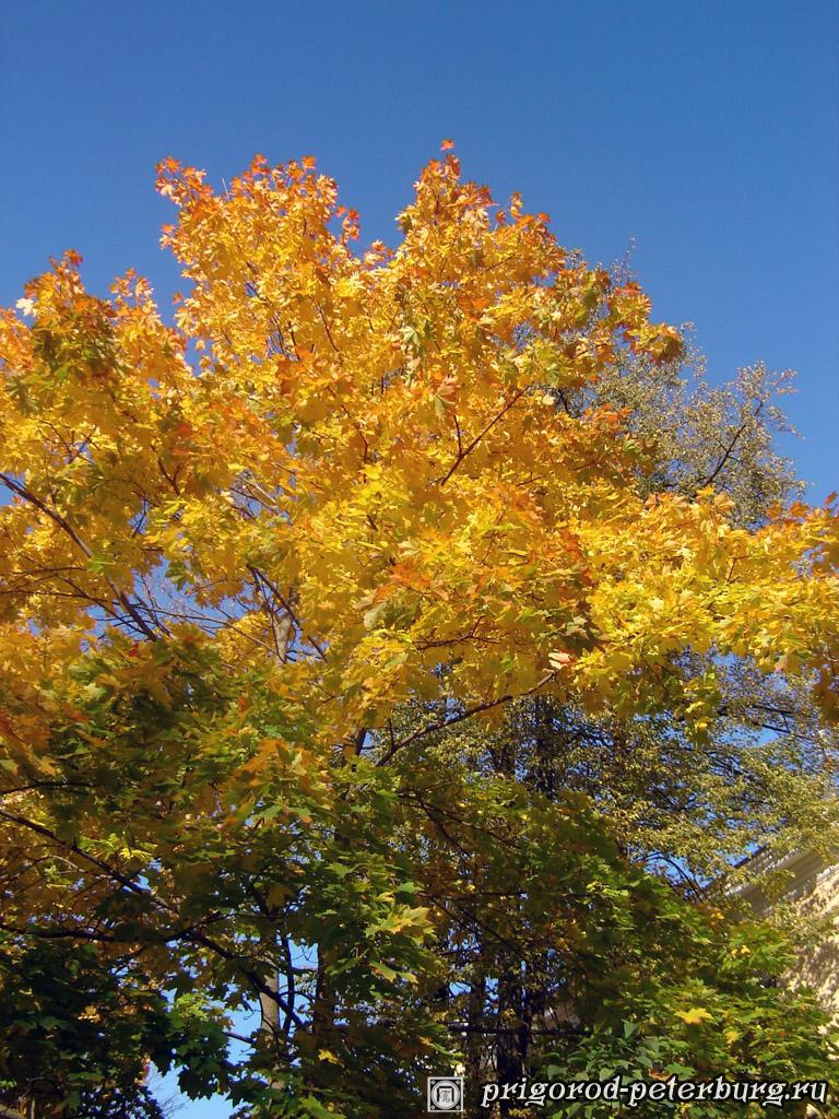 Пушкин в золотую осень
