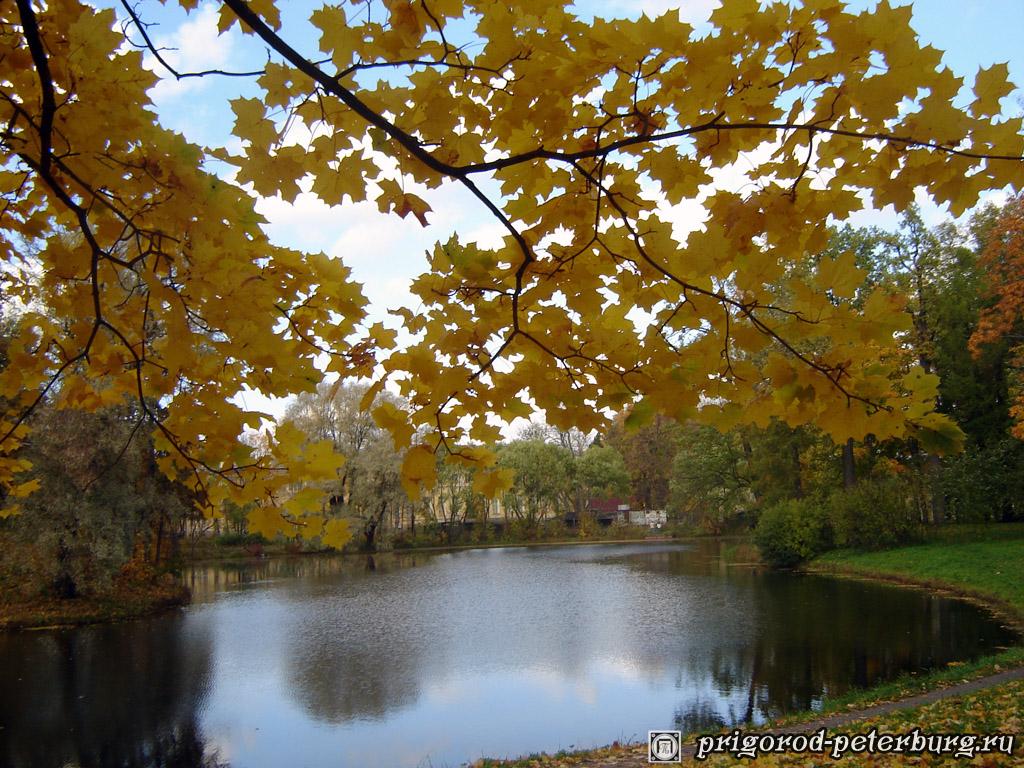 Золотая осень в Пушкинском Парке