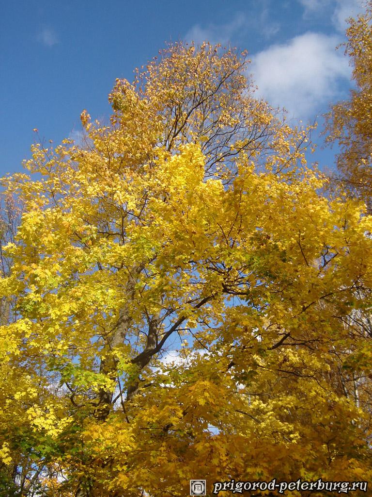красивые фото золотая осень