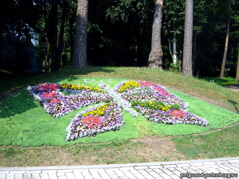 Зеленогорск - бабочка из цветов